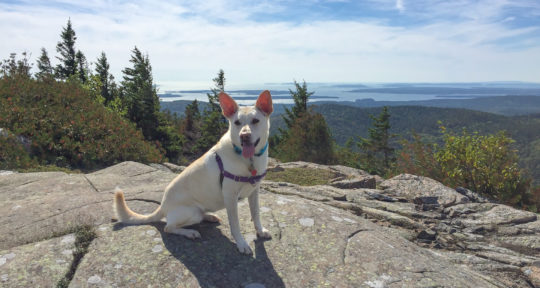 Have dog, will travel: Finding canine-friendly campsites isn't as easy as you might expect