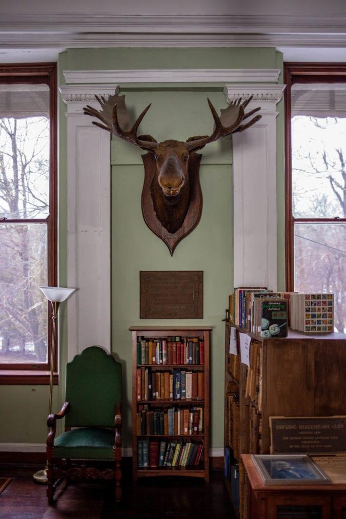 A moose looms over a bookshelf