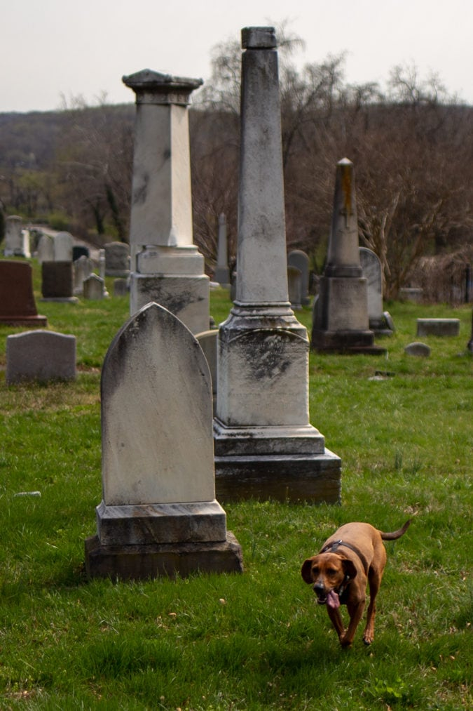 Dog running on the cemetery