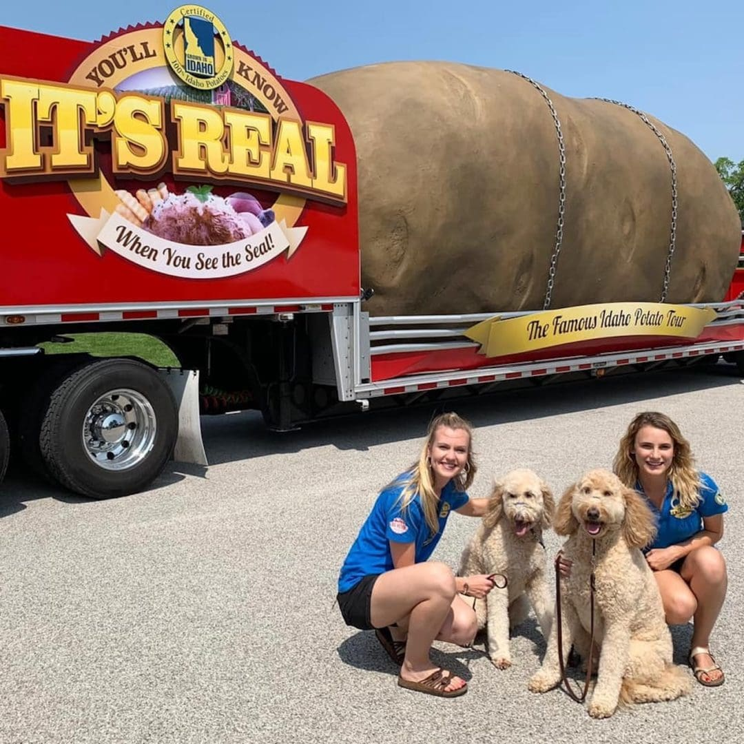 two blonde girls stand in front of the giant potato with dogs