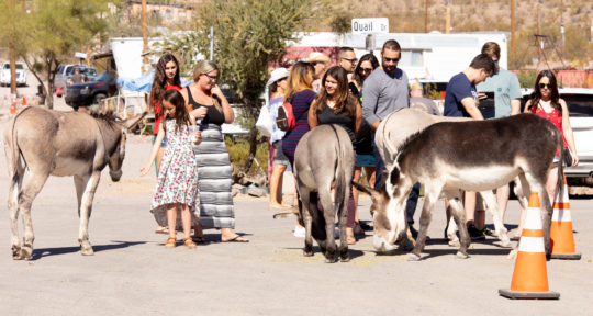 Where the wild burros roam: Lured by gold and ghosts, visitors just can't quit the tiny mountain town of Oatman, Arizona