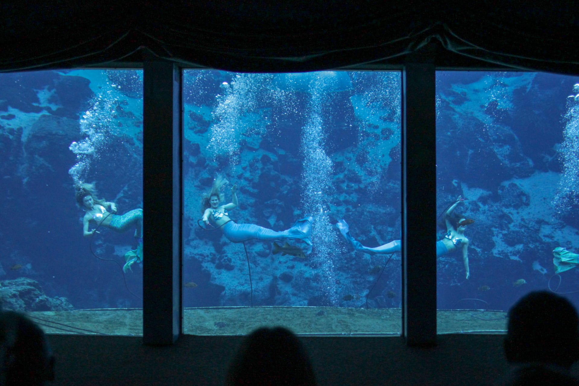 The mermaids perform 365 days a year.