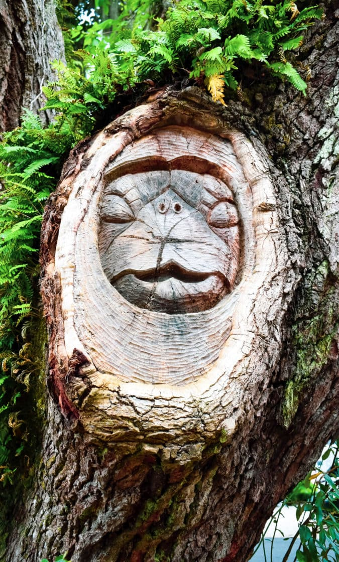 An animal face carved into an old oak tree.
