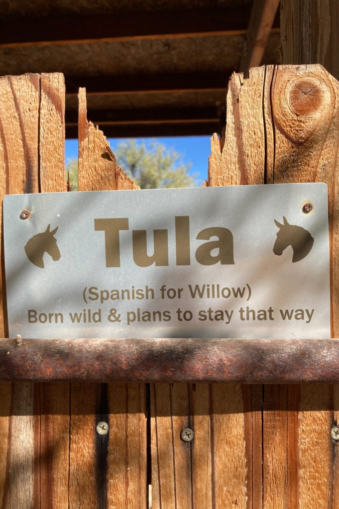 """a metal sign on a wooden fence with silhouettes of donkeys that reads """"tula (Spanish for willow) was born wild and plans to stay that way"""""""